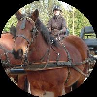 activité chevaux et calèche - Ferm'accueil