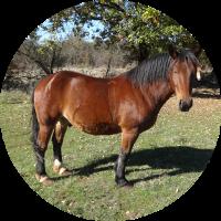 Alpha - chevaux - Ferm'accueil