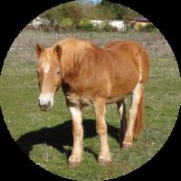 Lancelot - chevaux - Ferm'accueil